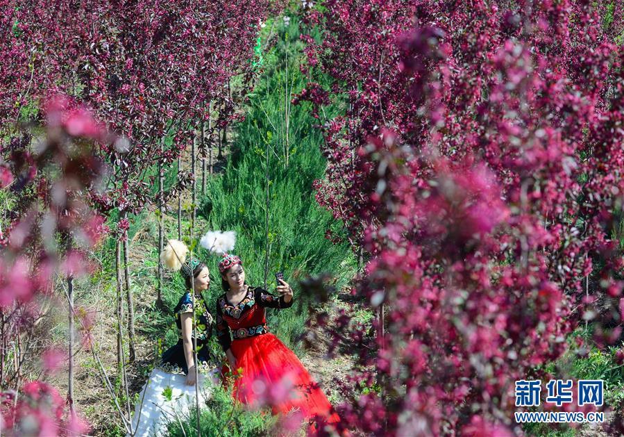 新疆:海棠花开春意浓2.jpg