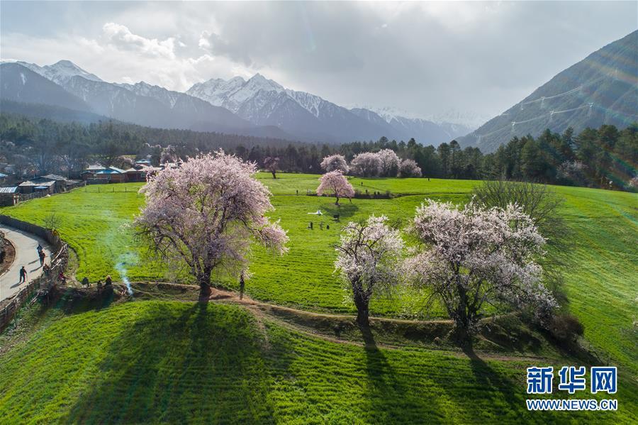 (環境)(5)西藏仍然是世界上生態環境最好的地區之一
