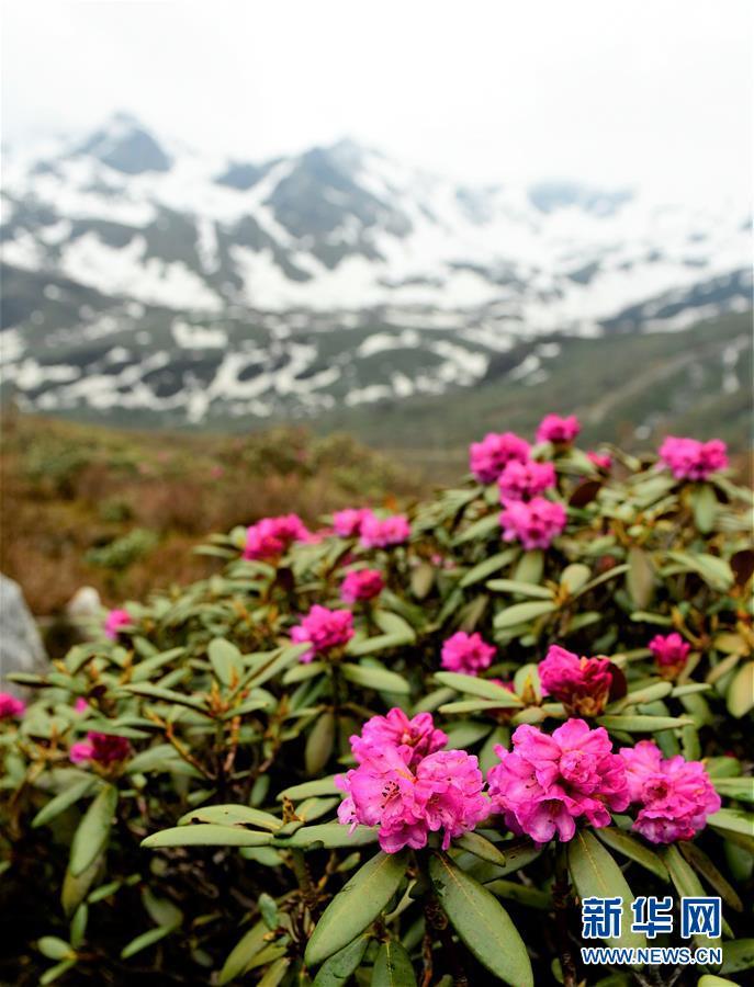 (環境)(11)西藏仍然是世界上生態環境最好的地區之一