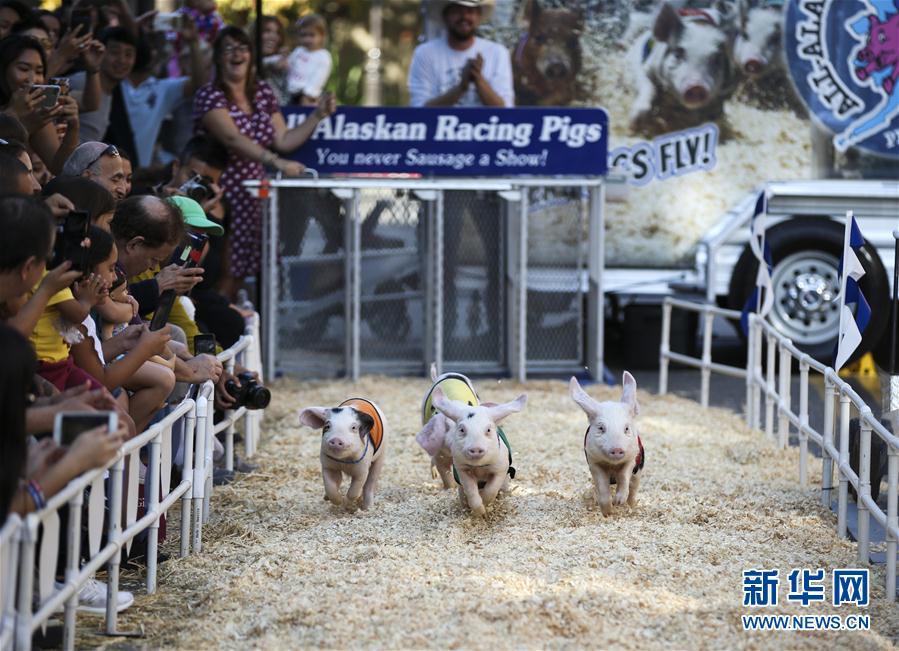 (体育)(1)小猪赛跑