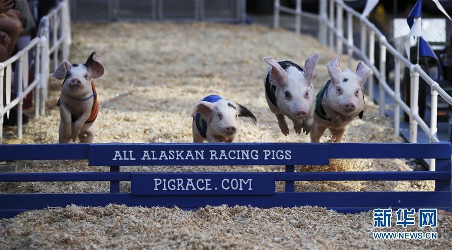(体育)(5)小猪赛跑