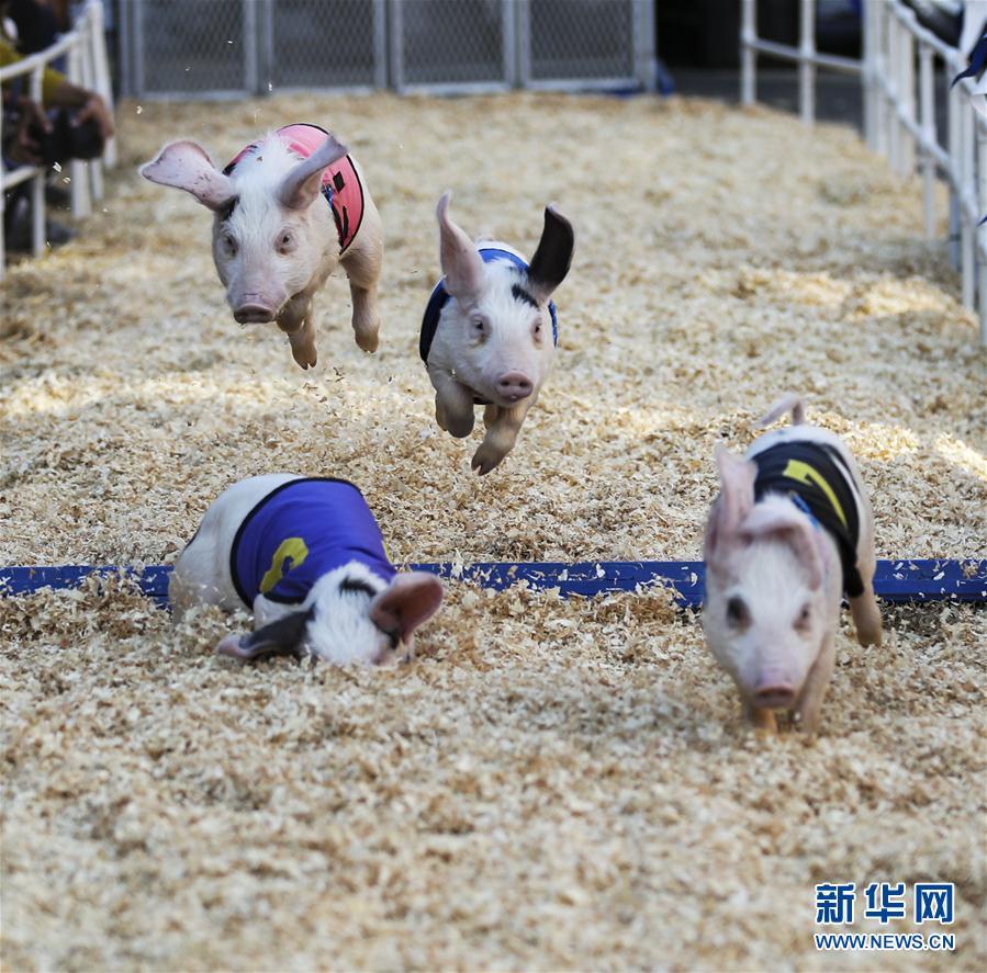 (体育)(6)小猪赛跑