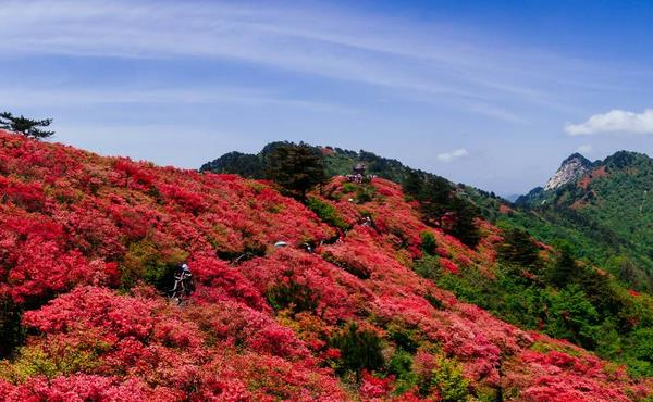 山紅之山—麻城龜峰山,婉約而浪漫,值得一游!