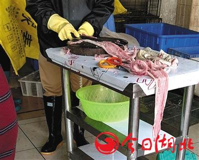 海寶灣水產市場內,一店主現場宰殺蛇類,店主并未佩戴口罩。