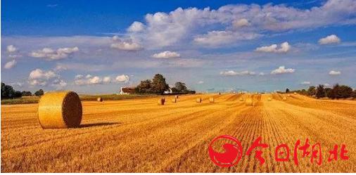 榕树贷款:金融服务加速提效 助力三农实现普惠